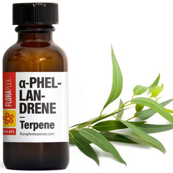 Alpha-Phellandrene - Floraplex Terpenes